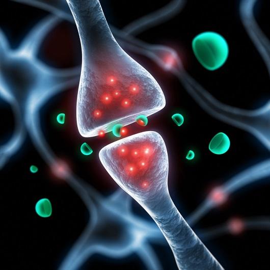 Darstellung der Übermittlung des Neurotransmitters in den Synapsen